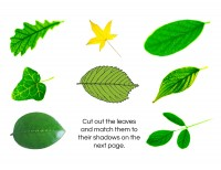Cut-and-Paste-Leaf-Shapes-1
