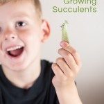 Gardening with Kids – Try Growing Succulents!
